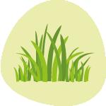 Grass crops